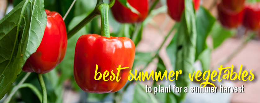 9 best summer vegetables to plant for summer harvest