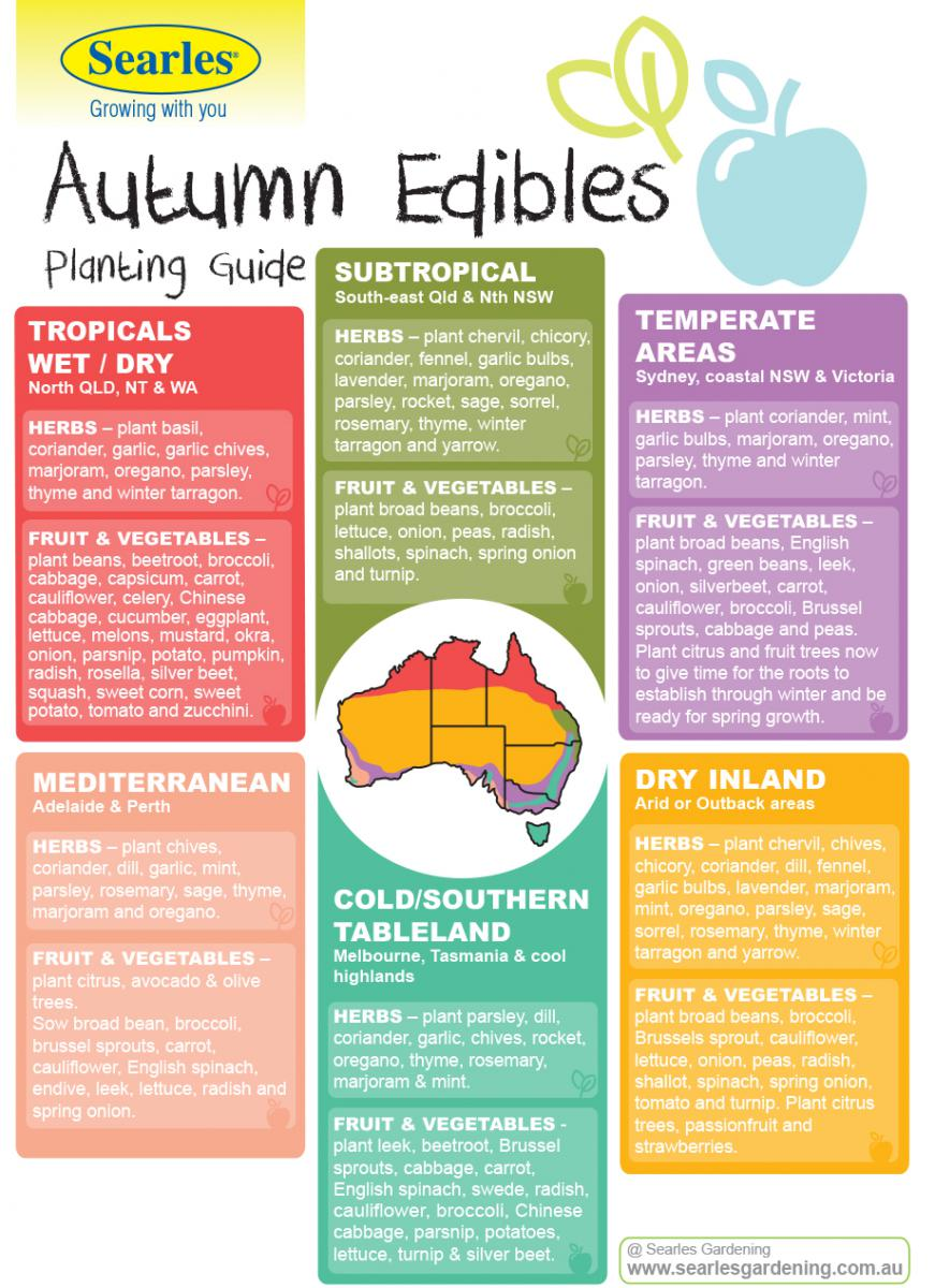 Autumn Herb, Vegetable and Fruit Planting Guide by temperate zones Australia