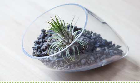 How to make a terrarium - plants to use for terrariums