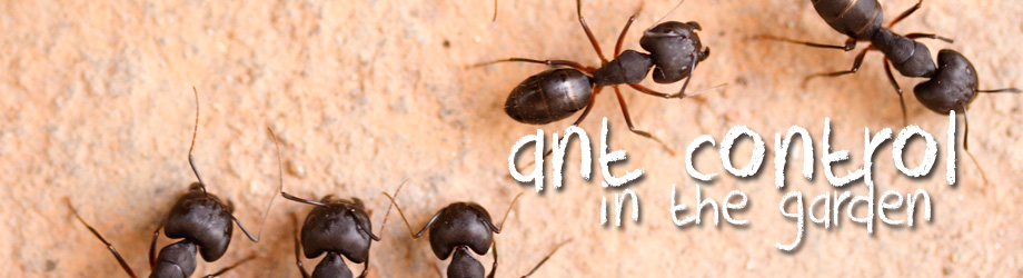 Garden   How To Control   How To Kill Ants In The Garden
