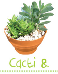 Searles Garden how to grow cacti and succulent planting