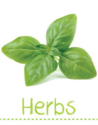 Searles Garden - Growing Herbs