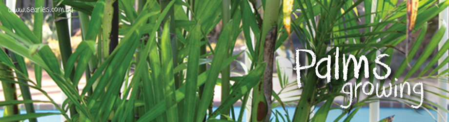 Garden - How to Grow - Growing and caring for palms