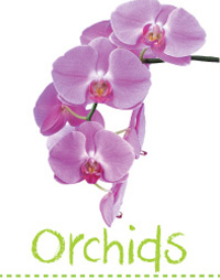 Searles Garden How to grow orchids planting