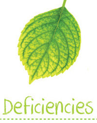 Searles Garden Problem Solver - Plant Deficiencies in the Garden