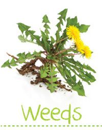 Searles Garden Problem Solver - Weed Control in the Garden