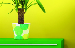 How to Grow - Indoor plant and watering care