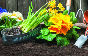How to Grow - growing healthy soils for planting