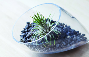 How to make create a terrarium - Top 10 plants for terrariums