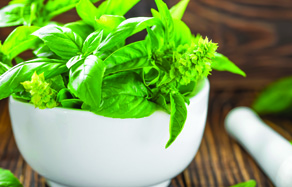 How to grow - growing and planting basil