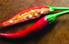 How to grow - growing and planting chilli in pots