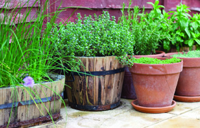 How to grow - growing and planting herbs in pots