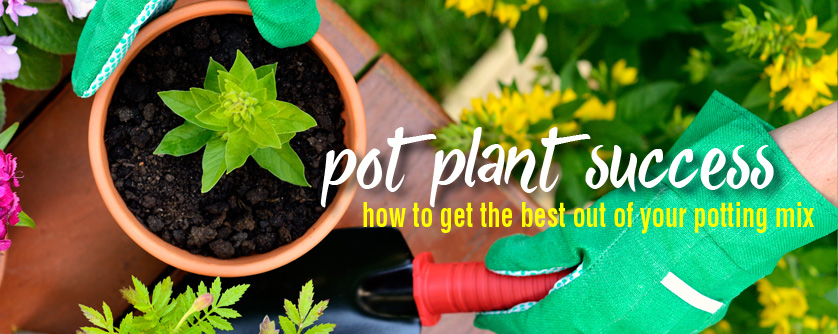 How to pot a plant - tips to promote pot plants to flower more
