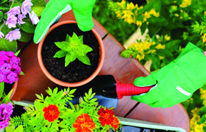 How to pot an plant - pot plant gardening tips