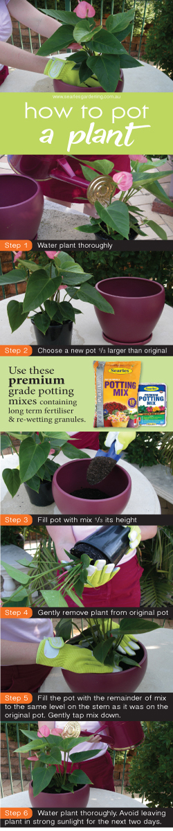 How to pot a plant - potting up tips - premium potting mix