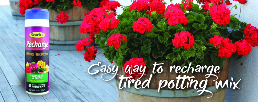 Improve old and tired potting mix and poor soil without re-potting