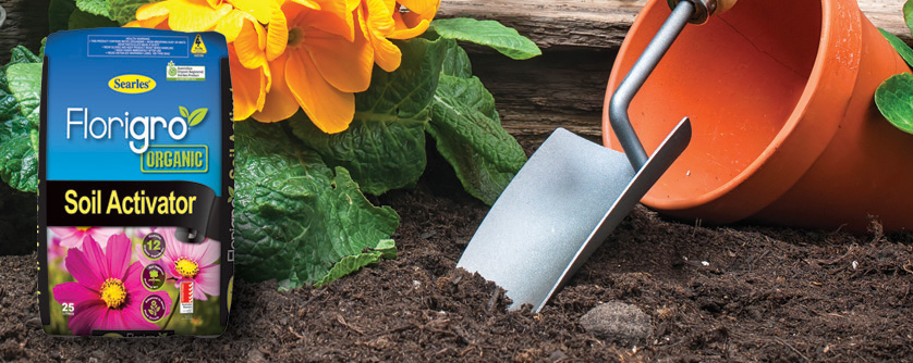 How to improve soil quality in garden beds – better plant health guide