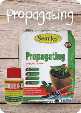 How to propagate cuttings