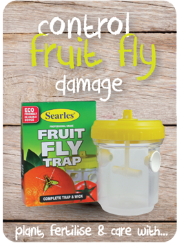 How to control Fruit Fly Damage on citrus and fruit trees