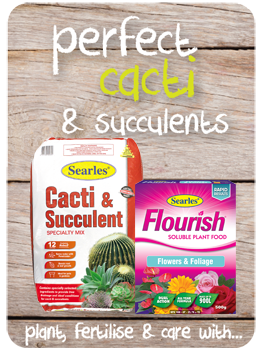 Searles Garden Products - Soil mix fertiliser plant food for growing cacti and succulent