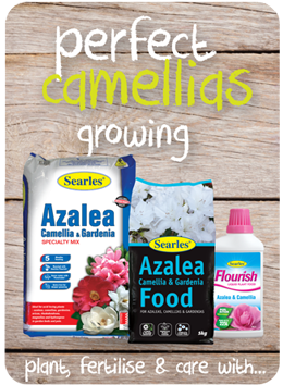 Searles Garden Products - Soil mix fertiliser plant food for growing camellias