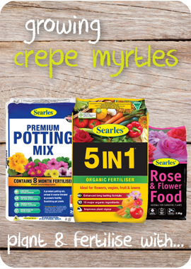 Searles Garden Products - planting mix and fertiliser for growing crepe myrtles