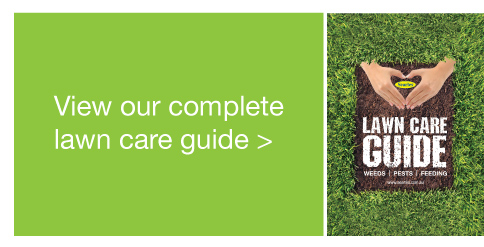 Searles Complete lawn care guide - Complete lawn care information for Australian lawn care