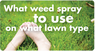 What lawn weed spray to use on my lawn type - lawn care