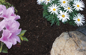Why mulch a garden - mulching tips