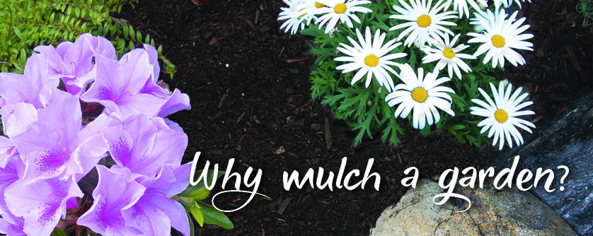 Why mulch a garden? - mulching tips for how to apply mulch