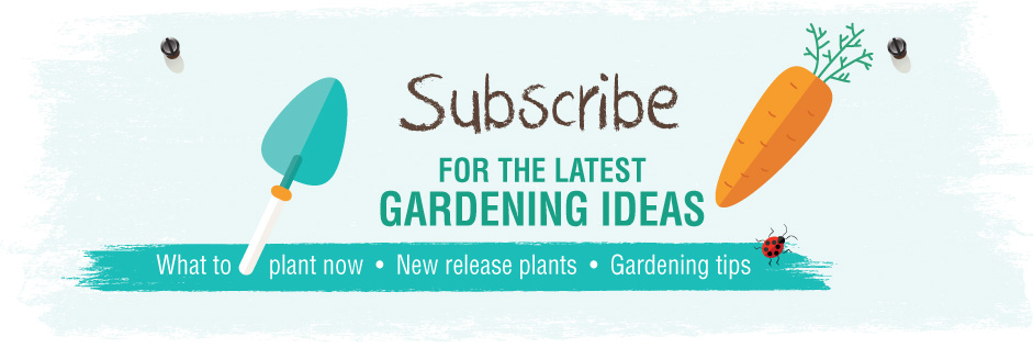 Garden Club - Gardening Advice - Garden Tips - How to garden better