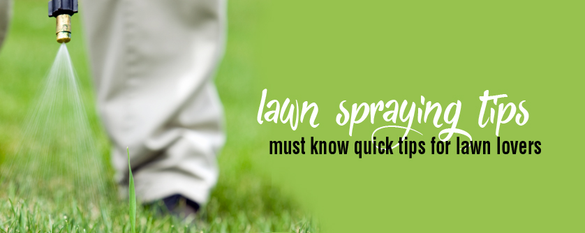 lawn spraying tips for more effective weed control