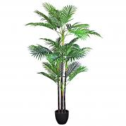 Cane Palm with Pot 150cmH