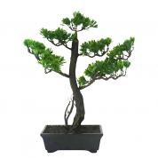 Bonsai w Pot 30cmH
