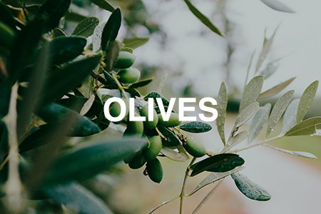 How to grow olives