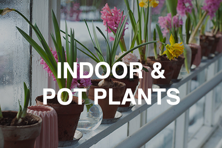 Indoor & pot plants