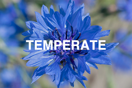 Grow Now - Temperate region