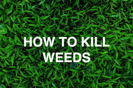 How to kill lawn and garden weeds