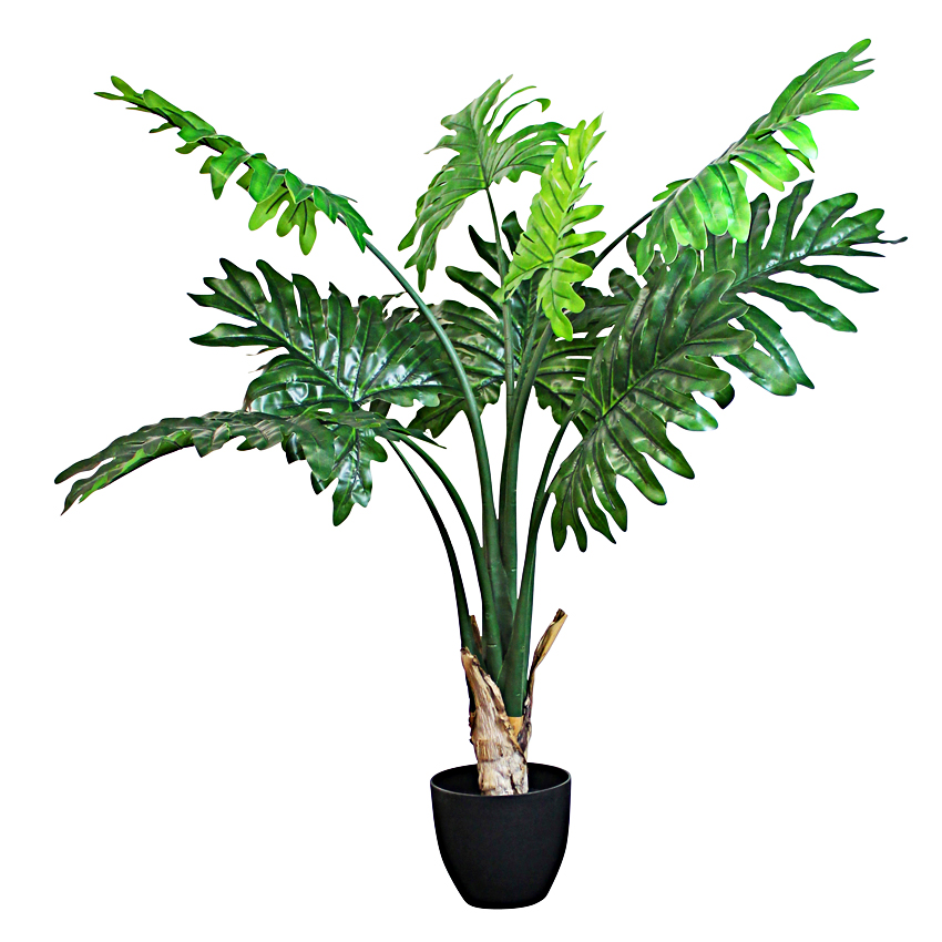 Philodendron with Pot 120cm