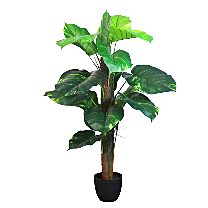 Pothos Tree with Pot 80cm