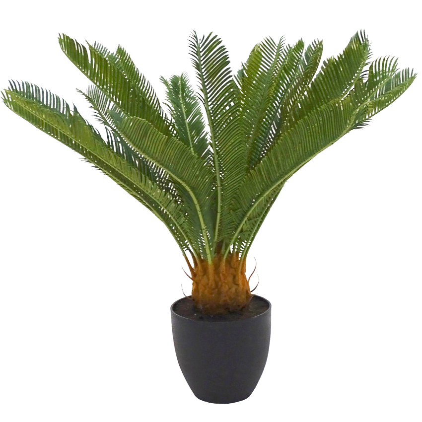 Cycad with Pot 71cm