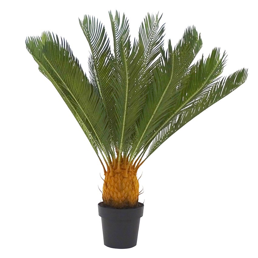 Cycad with Pot 93cm