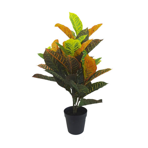 Croton with Pot 74cm