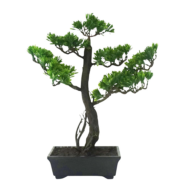 Bonsai with Pot 30cmH