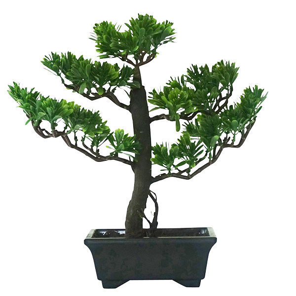 Bonsai with Pot 41cmH
